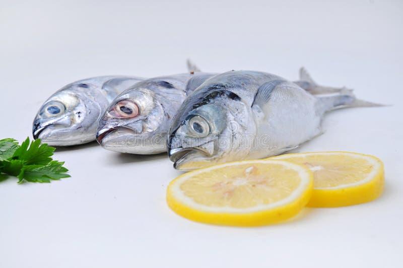 Ataque o Scad (peixe) com limão imagem de stock royalty free
