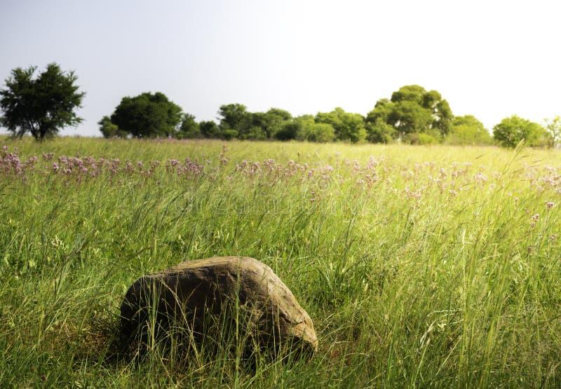 Atardecer sobre una roca en la reserva natural Rietvlei, Gauteng, Sudáfrica fotografía de archivo