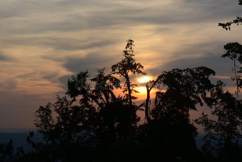 Atardecer tras un árbol en Belgrado foto de archivo libre de regalías