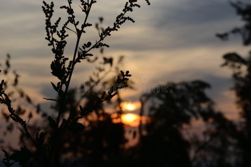 Atardecer tras una rama en Belgrado fotos de archivo libres de regalías