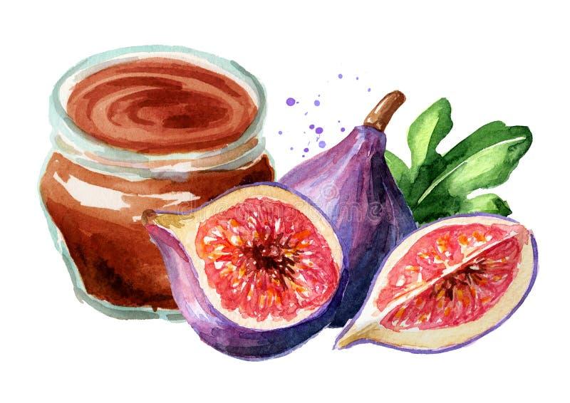 Atasco org?nico de la fruta Tarro de cristal de mermelada del higo y de fruta fresca aisladas en el fondo blanco Ejemplo dibujado fotografía de archivo