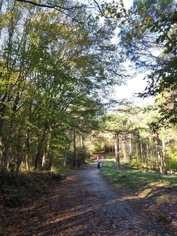 Ataturk Arboretum botanic park on Autumn, Istanbul royalty free stock photo