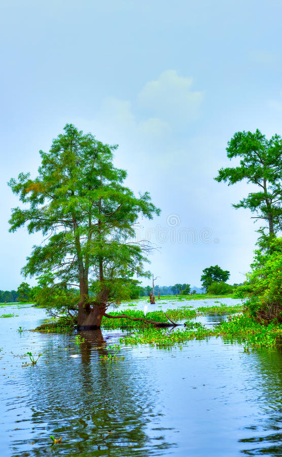 Atchafalaya flod arkivbilder
