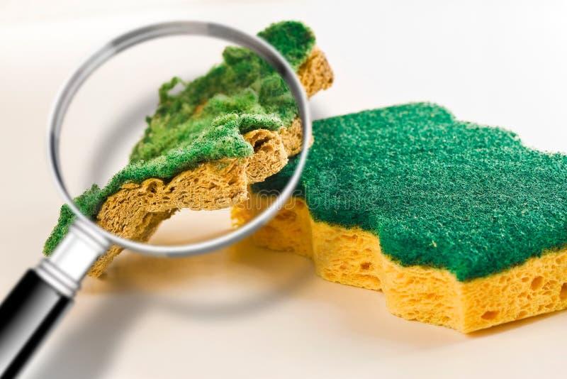 Atenção do pagamento às esponjas velhas para a limpeza do agregado familiar da cozinha: podem esconder as bactérias perigosas - i imagem de stock royalty free