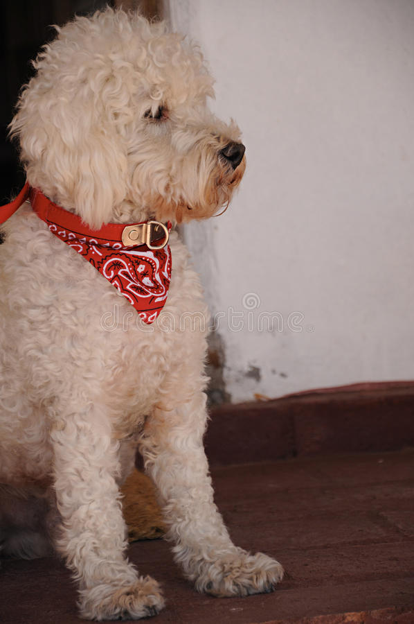 Atenção pagando canino no patamar imagem de stock