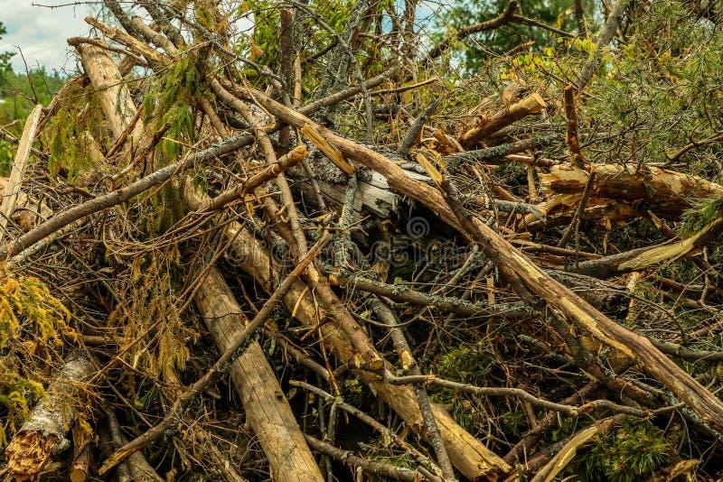 Aten de stagnatie droge takken gebroken het ontruimen van de ophelderings bosorkaan bosbouw als achtergrond royalty-vrije stock foto's