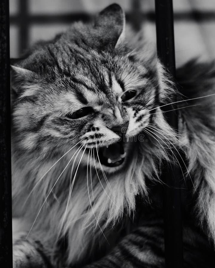 Atenea is angry stock photo