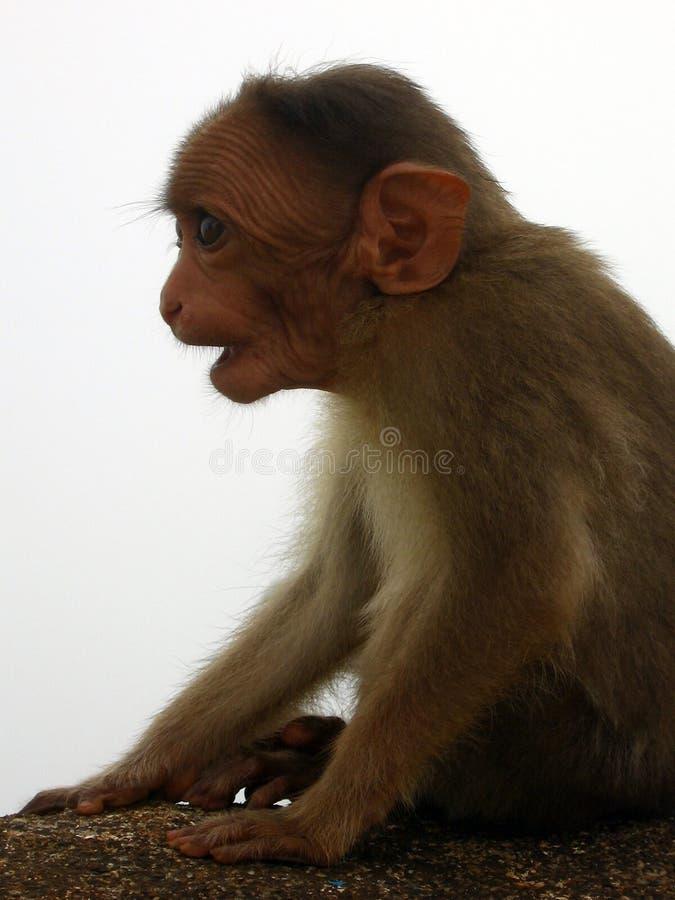 Download Aterrado imagen de archivo. Imagen de pelo, piel, animal - 1290447