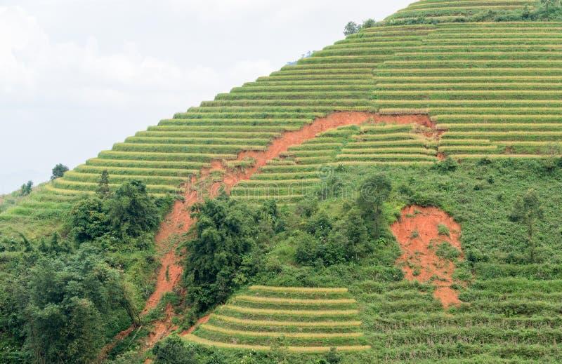 Aterre a corrediça ou a erosão no terraço do arroz em Sapa fotografia de stock royalty free