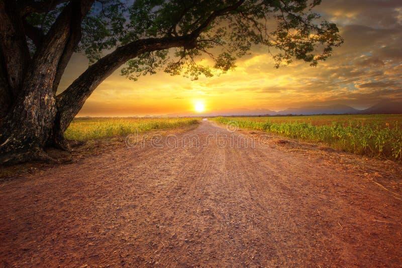 Aterre o scape da estrada dustry na cena rural e na planta grande da árvore de chuva foto de stock