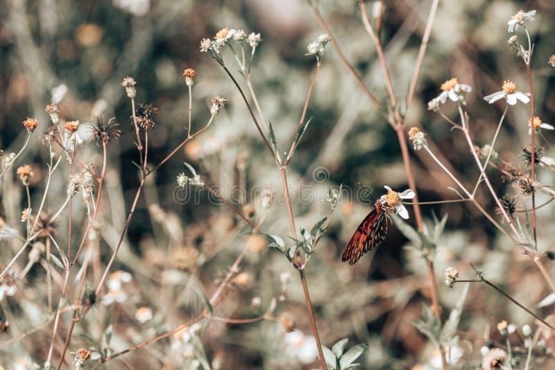 Aterrissagem com borboletas em flores silvestres fotos de stock royalty free