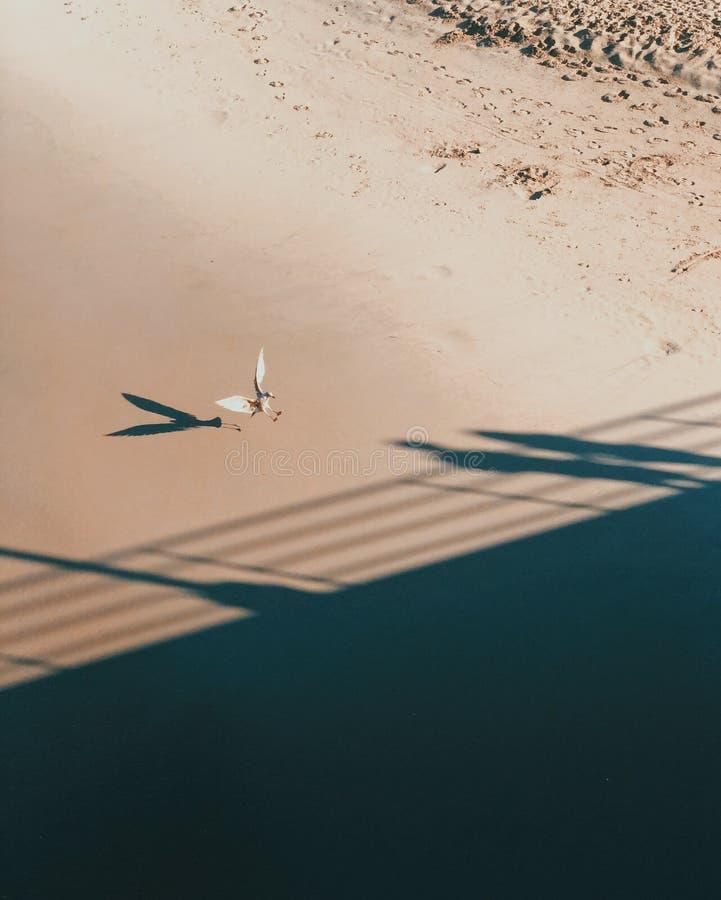 Aterrissagem da gaivota no Sandy Beach imagem de stock royalty free