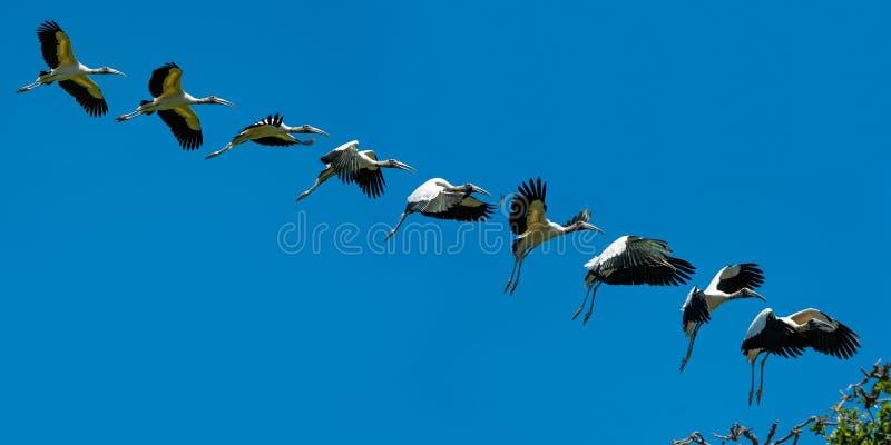 Aterrizaje de la cigüeña de madera imagen de archivo