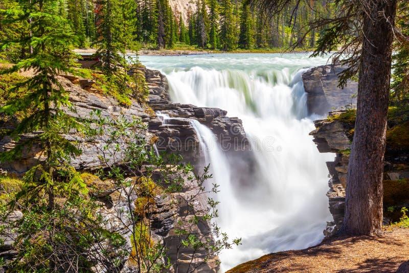 Athabasca baja en Jasper National Park, Alberta, Canadá foto de archivo libre de regalías