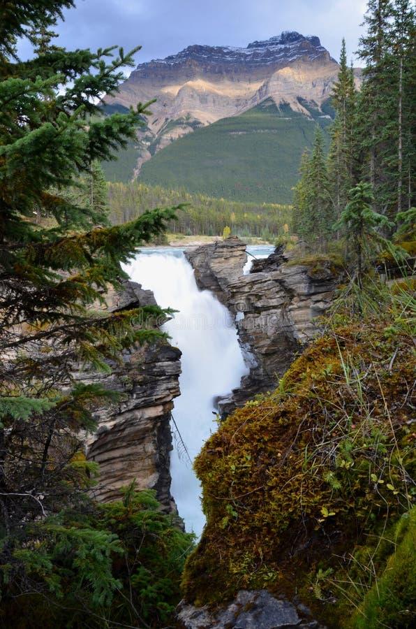 Athabasca cae en la ruta verde de Icefields imagen de archivo libre de regalías