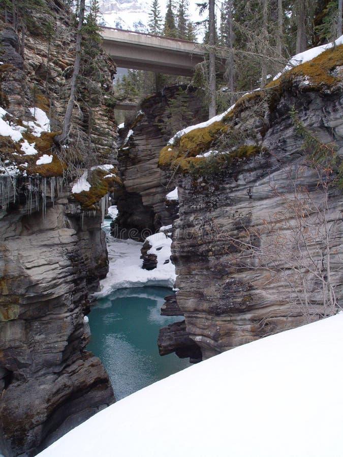 Athabasca cai no jaspe imagem de stock royalty free