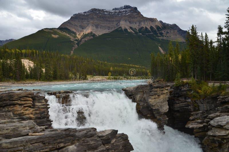 Athabasca fällt auf die Icefields-Allee stockfoto