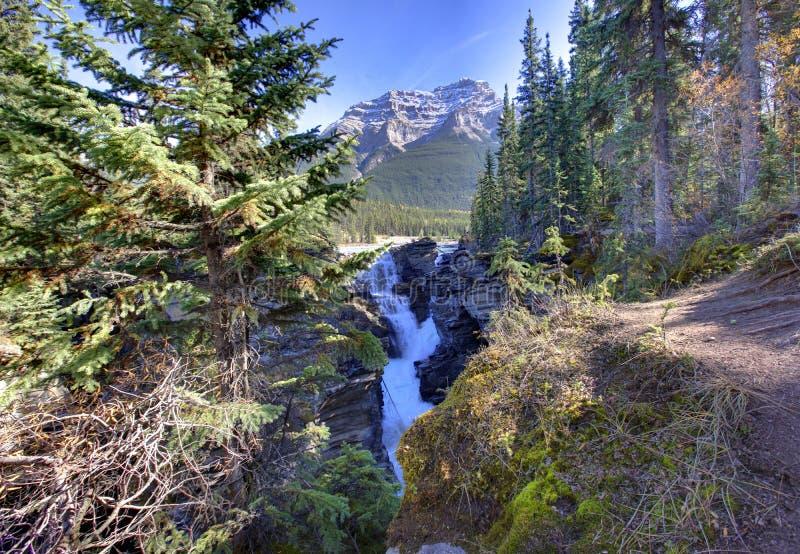 Athabasca fällt durch das Holz lizenzfreie stockfotografie