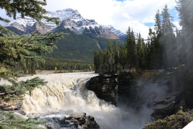 Athabasca faller i Jasper royaltyfria bilder