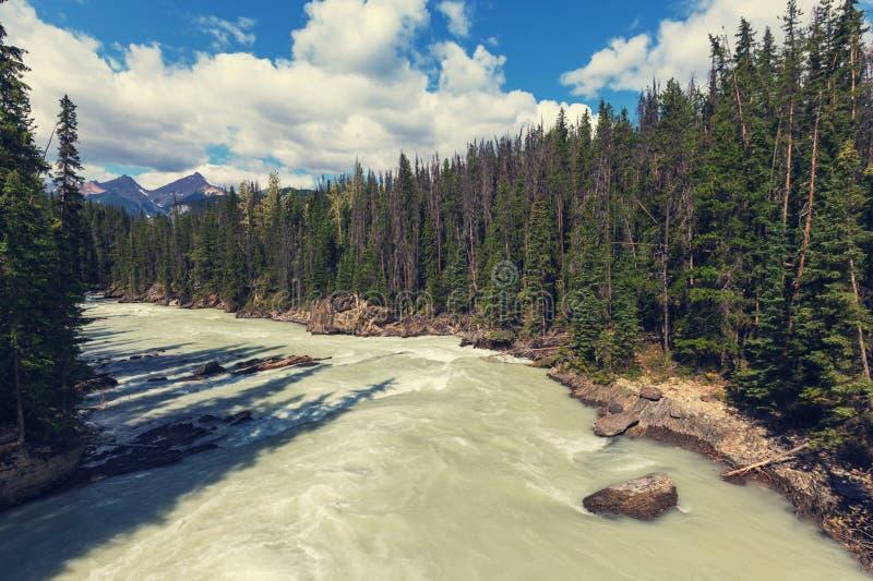 Athabasca flod royaltyfri bild
