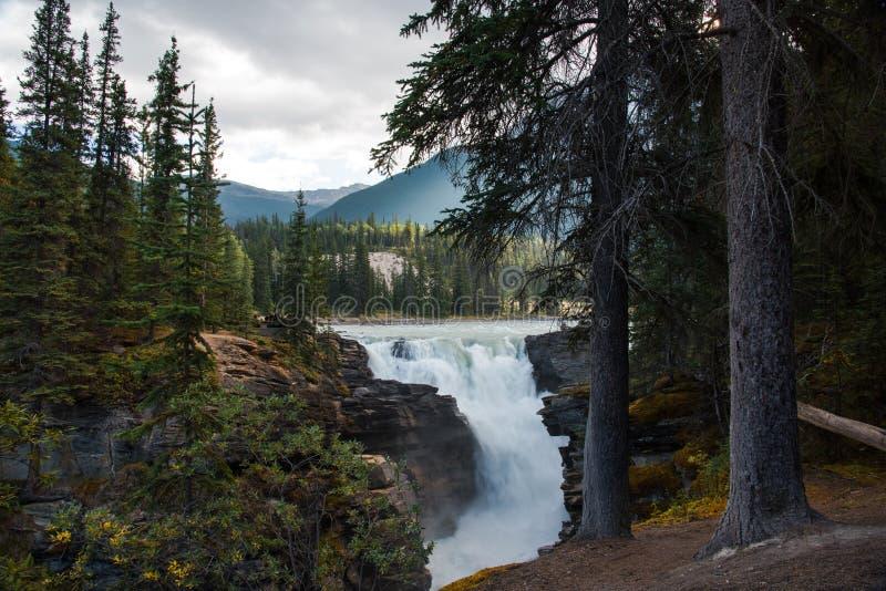 Athabasca nedgångar i Jasper National Park - Alberta, Kanada royaltyfria foton