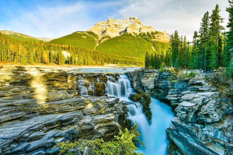 Athabasca tombe en automne, Jasper National Park, Canada photographie stock libre de droits