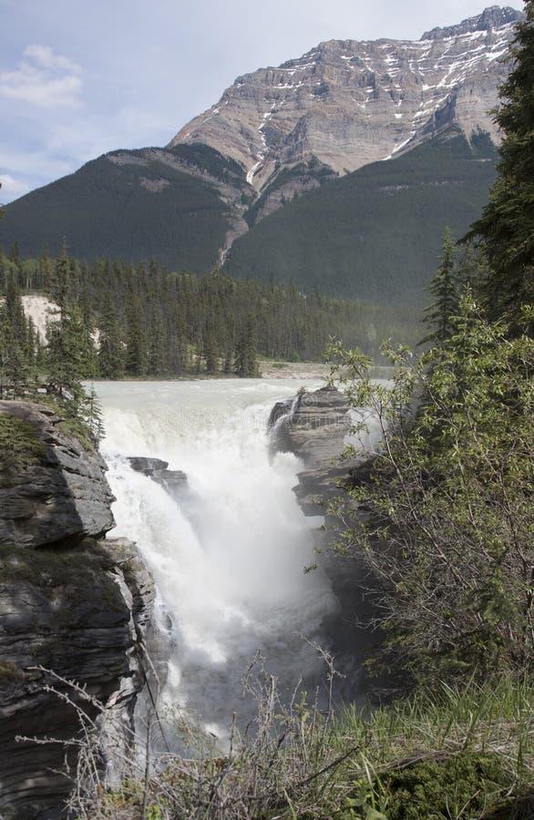 Athabasca valt 4389 royalty-vrije stock afbeelding