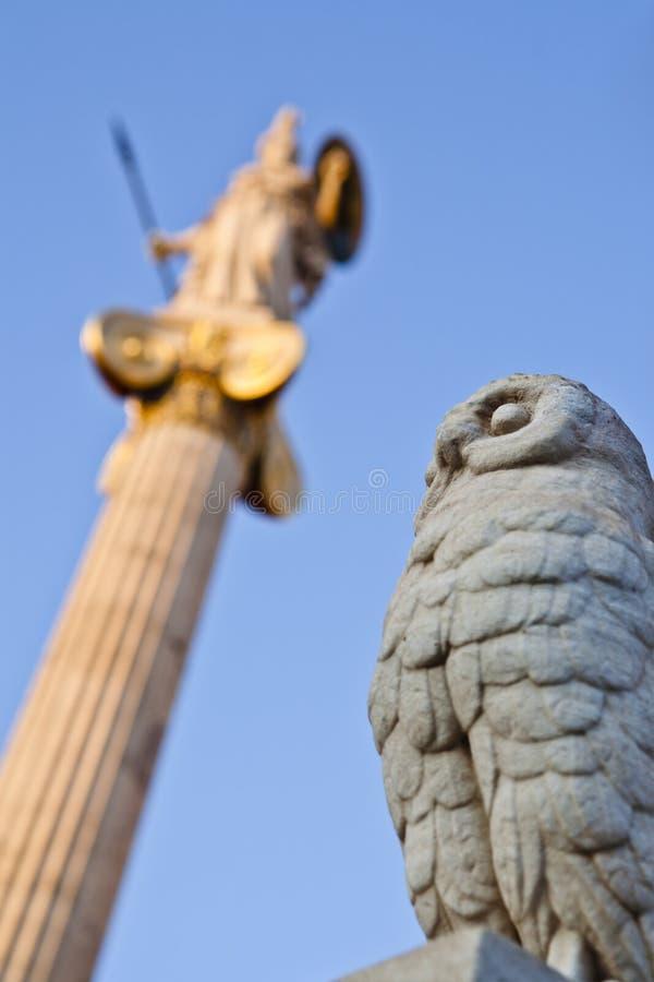 athena owl arkivfoto