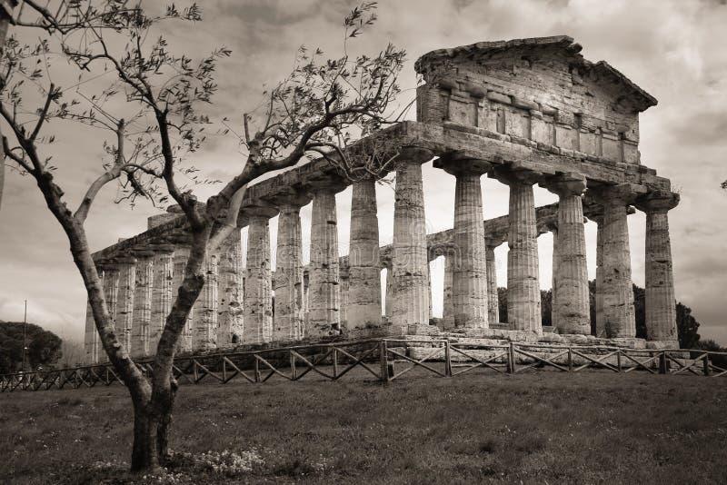 athena tempel Paestum salerno Campania italy royaltyfria bilder