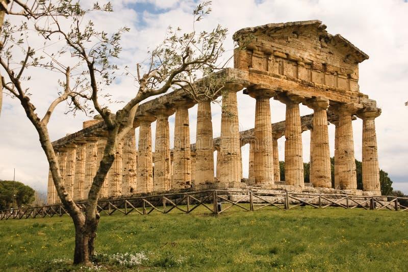 athena tempel Paestum salerno Campania italy arkivfoto