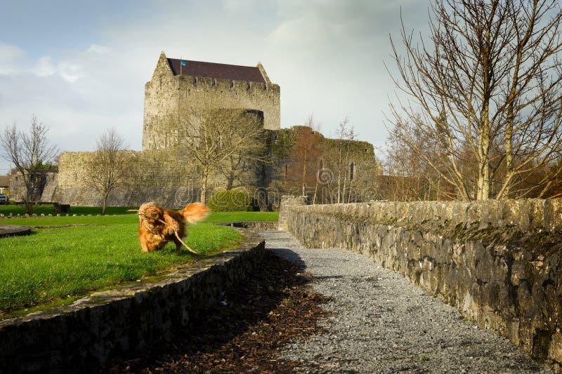 Athenry Schloss und spielen Hund stockfotografie