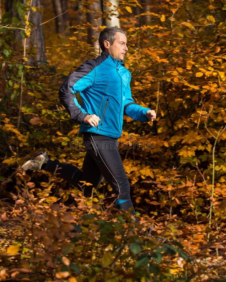 Athlet, der in den Wald im Herbst läuft lizenzfreies stockfoto