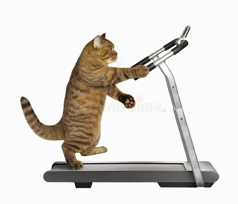 Cat athlete on a treadmill royalty free stock images