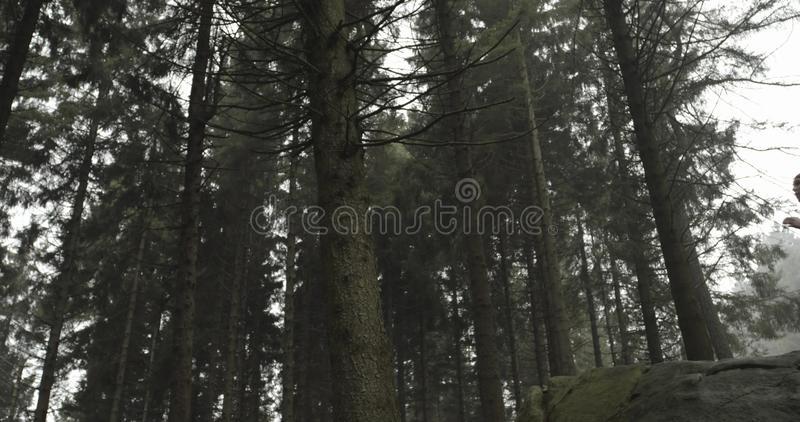 Athlete girl running through forest woods.Reaching, stopping on rock.Real people woman runner sport training in autumn. Athlete girl running through forest woods stock photography