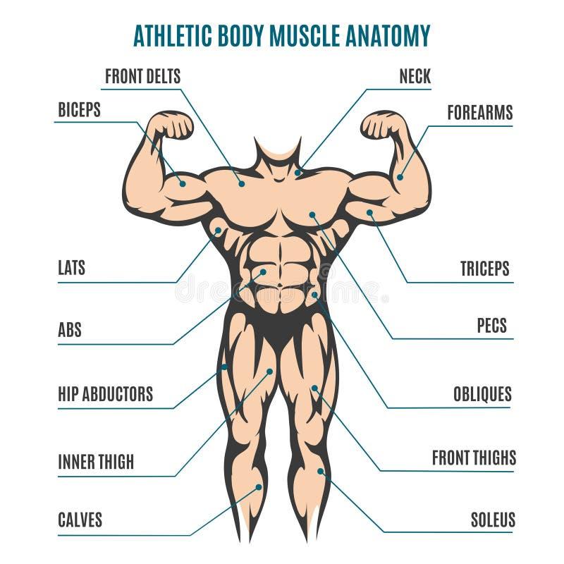 Athletic Body Man Figure Muscular Anatomy Stock Vector ...