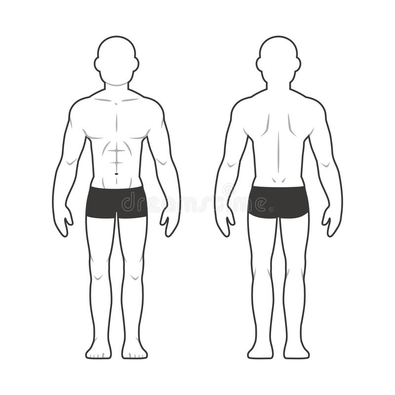 Athletic male body chart stock illustration