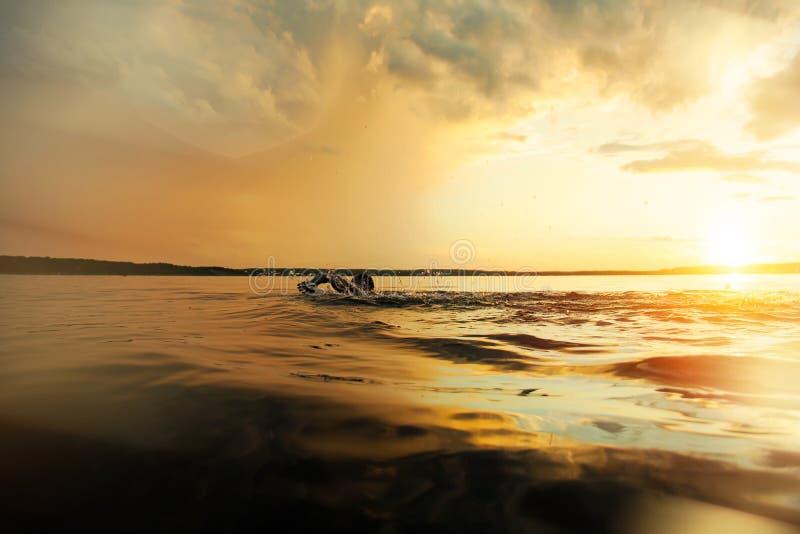 Athletic man doing swim across the lake at sunset stock photo