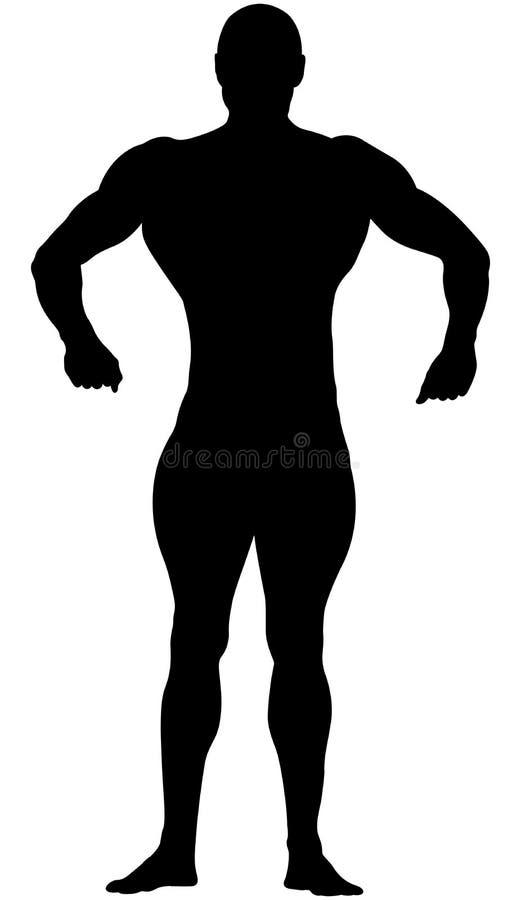 Athletischer Bodybuilder im vollen Wachstum vektor abbildung