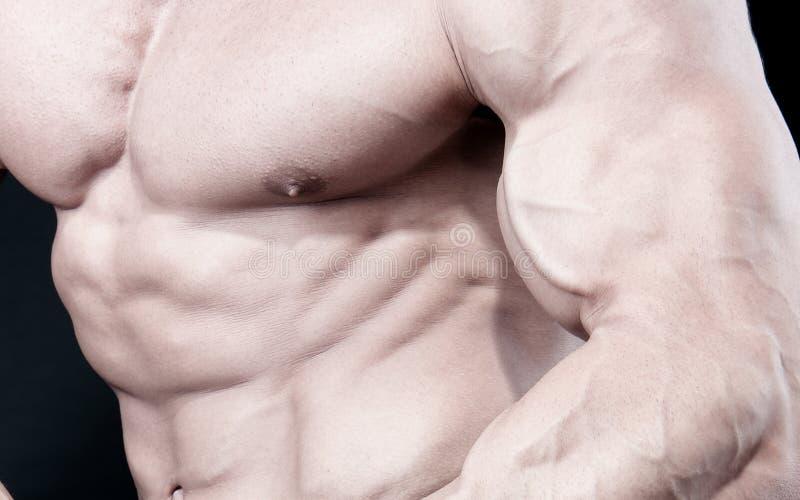Athletischer reizvoller attraktiver Erbauer der männlichen Karosserie lizenzfreies stockbild