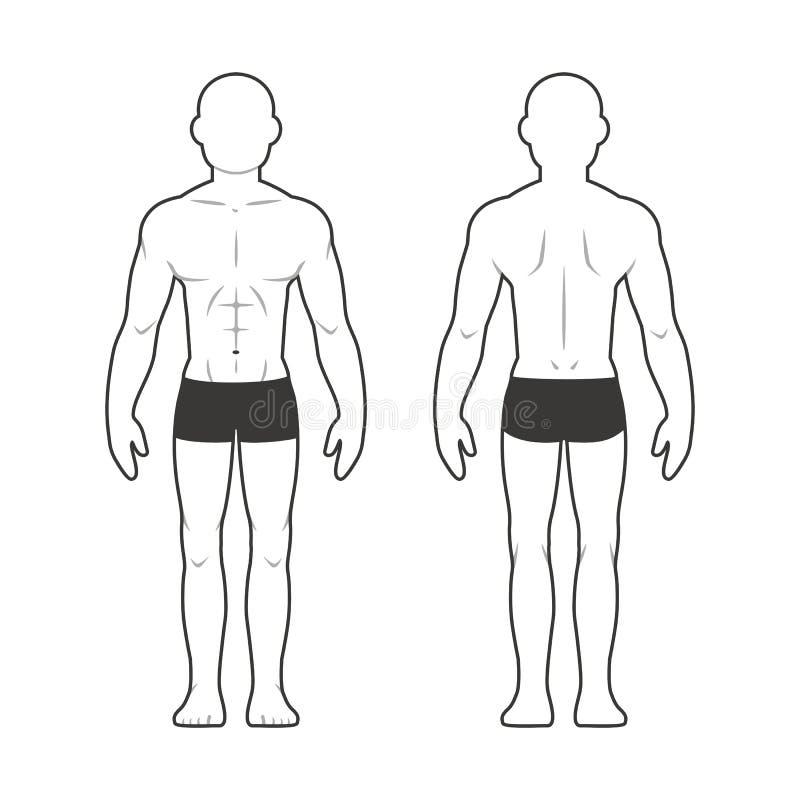 Ziemlich Männliche Körperteile Zeitgenössisch - Menschliche Anatomie ...