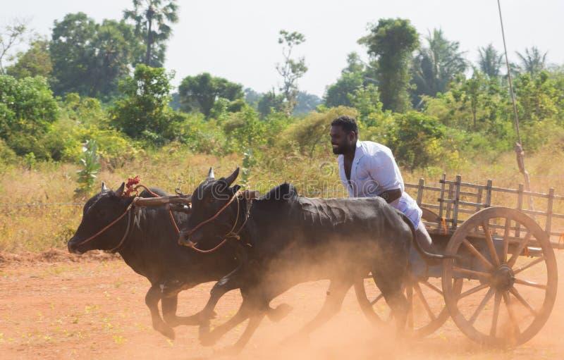 Atividade recreacional tradicional do esporte em Jaffna imagem de stock royalty free
