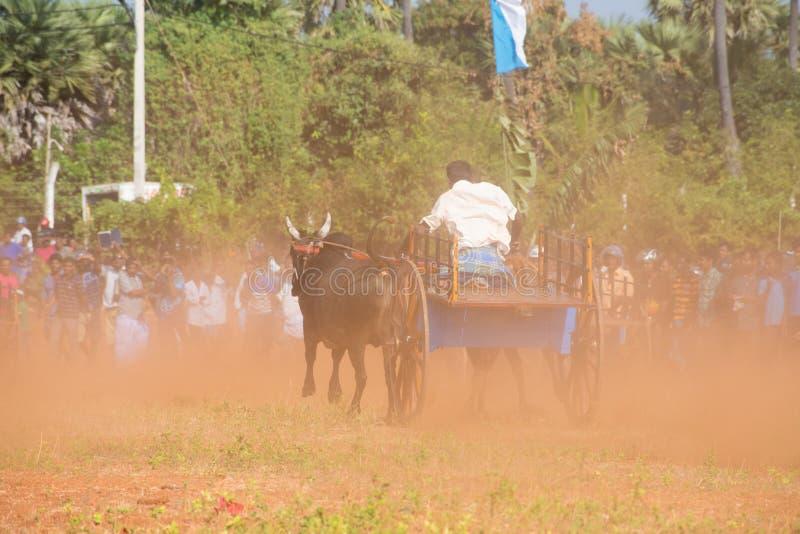 Atividade recreacional tradicional do esporte em Jaffna fotografia de stock
