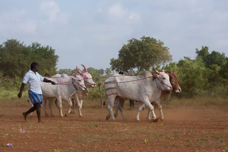 Atividade recreacional tradicional do esporte em Jaffna imagem de stock