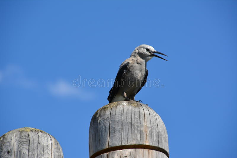 AtLake Луиза Канада птицы стоковая фотография