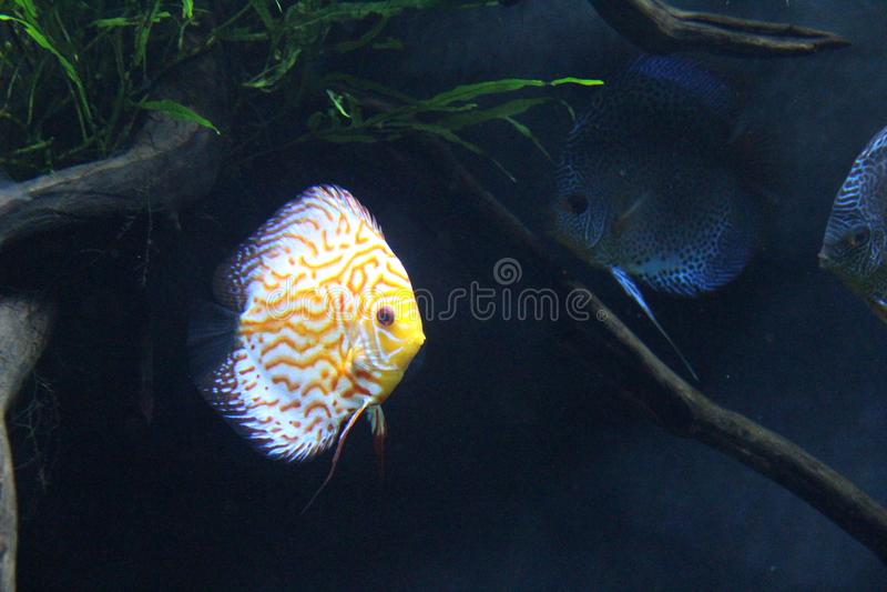 Atlanta akvariefisk royaltyfria foton