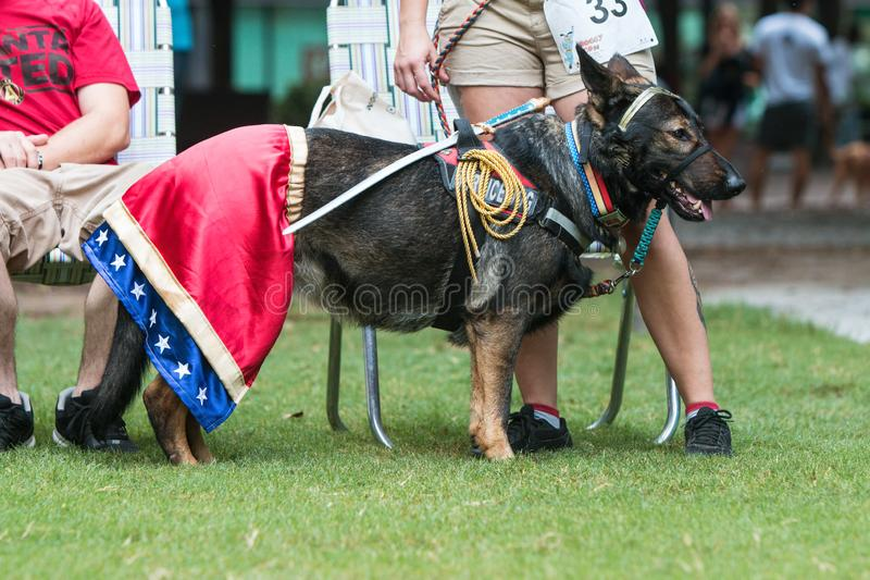 Dog Wears Wonder Woman Costume At Atlanta Doggy Con Event. Atlanta, GA, USA - August 18, 2018: A dog wears a Wonder Woman costume at Doggy Con, a dog costume stock image