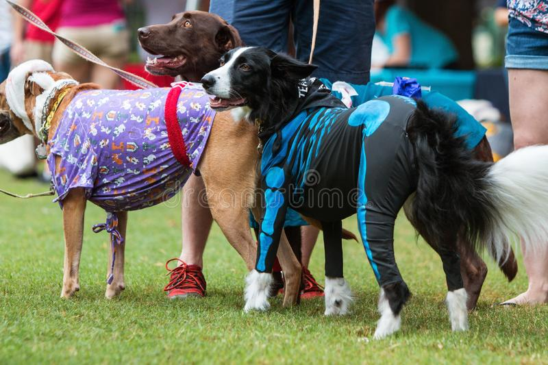 Happy Dogs Wear Various Costumes At Atlanta Doggy Con Event. Atlanta, GA, USA - August 18, 2018: Dogs wear various costumes at Doggy Con, a dog costume contest royalty free stock photo