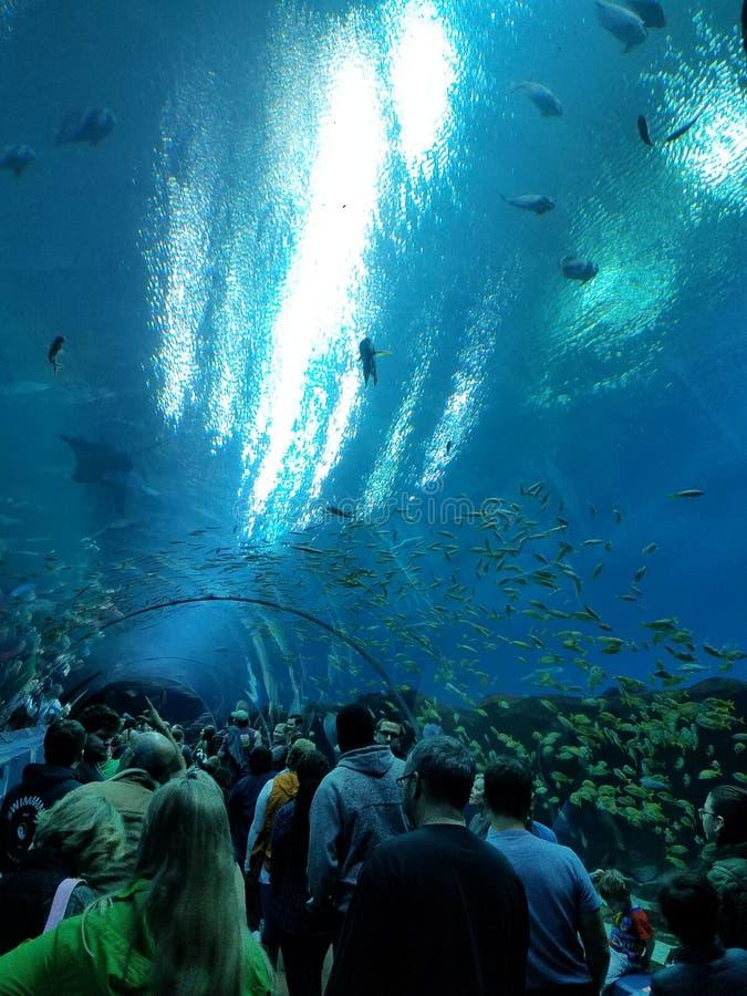 Atlanta Georgia Aquarium imagem de stock royalty free