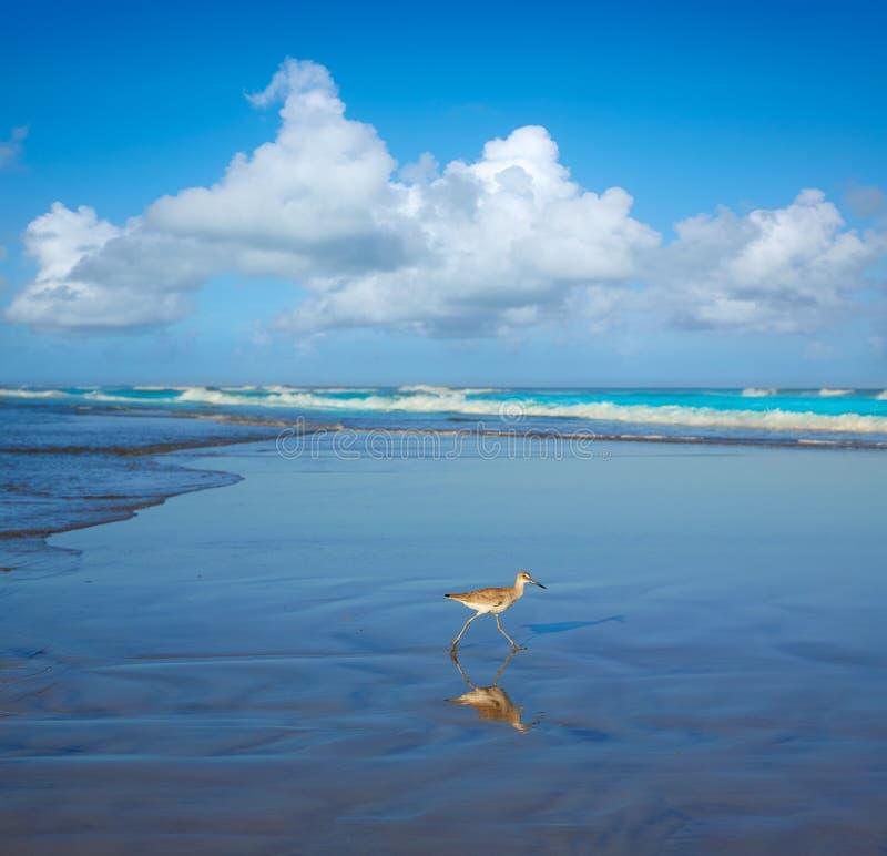 Atlantic Beach in Jacksonville of florida USA royalty free stock photography