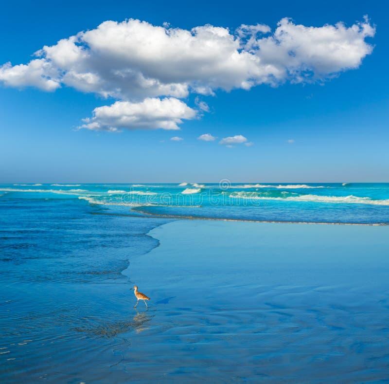 Atlantic Beach in Jacksonville of florida USA royalty free stock photos